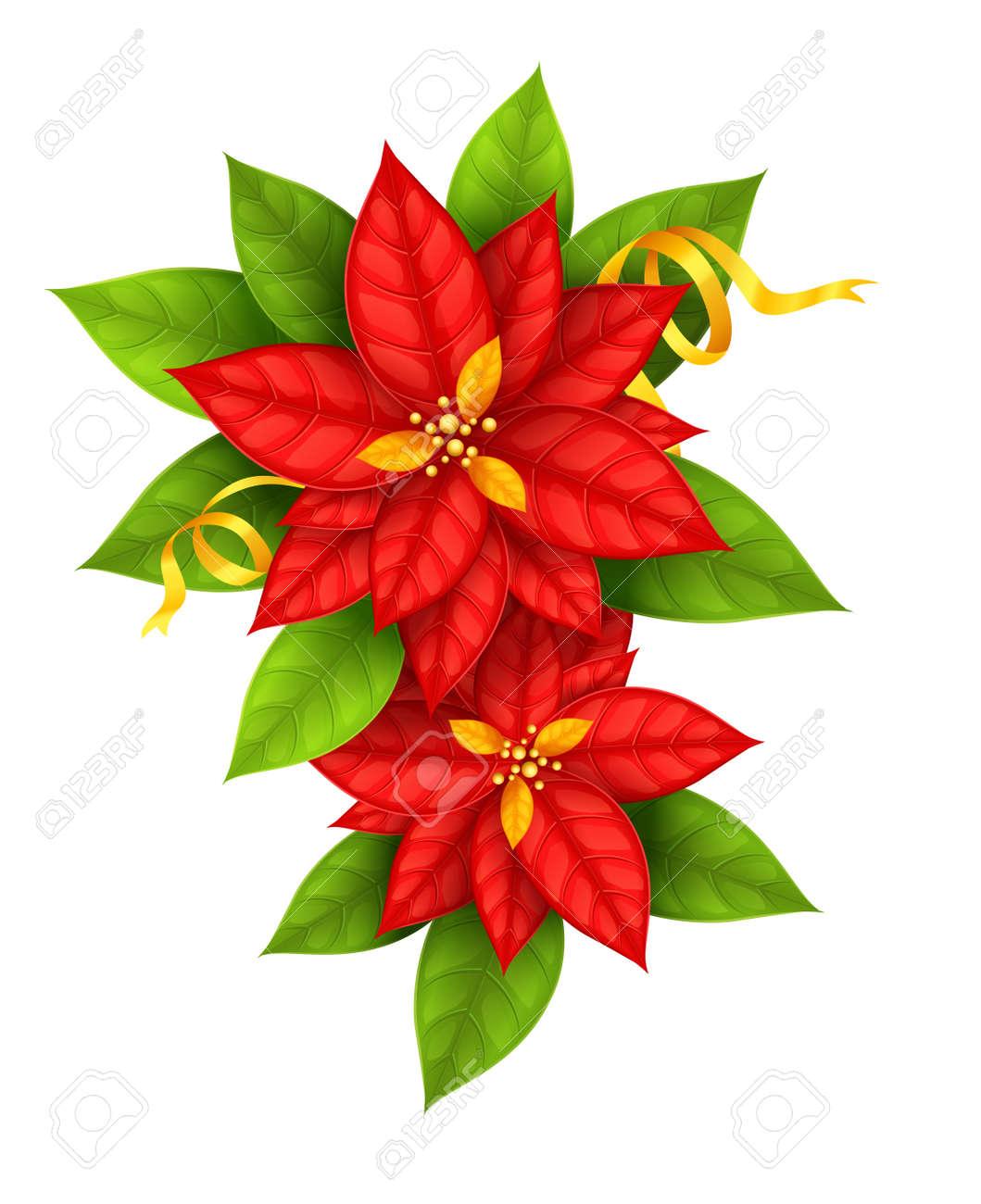 Red Weihnachtsstern Blumen Weihnachtsstern Mit Goldenen Schleife Auf ...