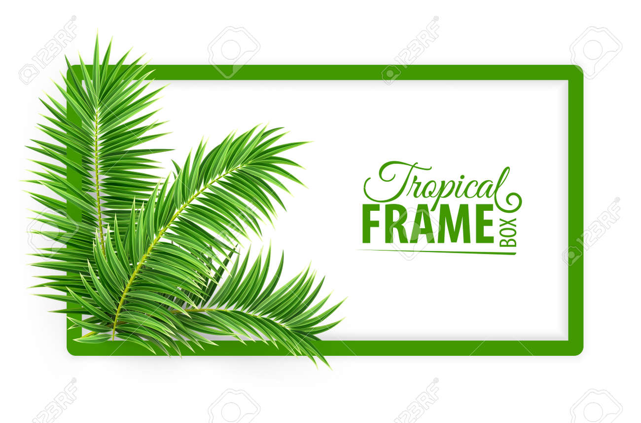 Tropical jungle botanical banner frame. Design layout with green palm tree leaves and place for text. Realistic isolated on white transparent background. Eps10 vector illustration. - 123586925