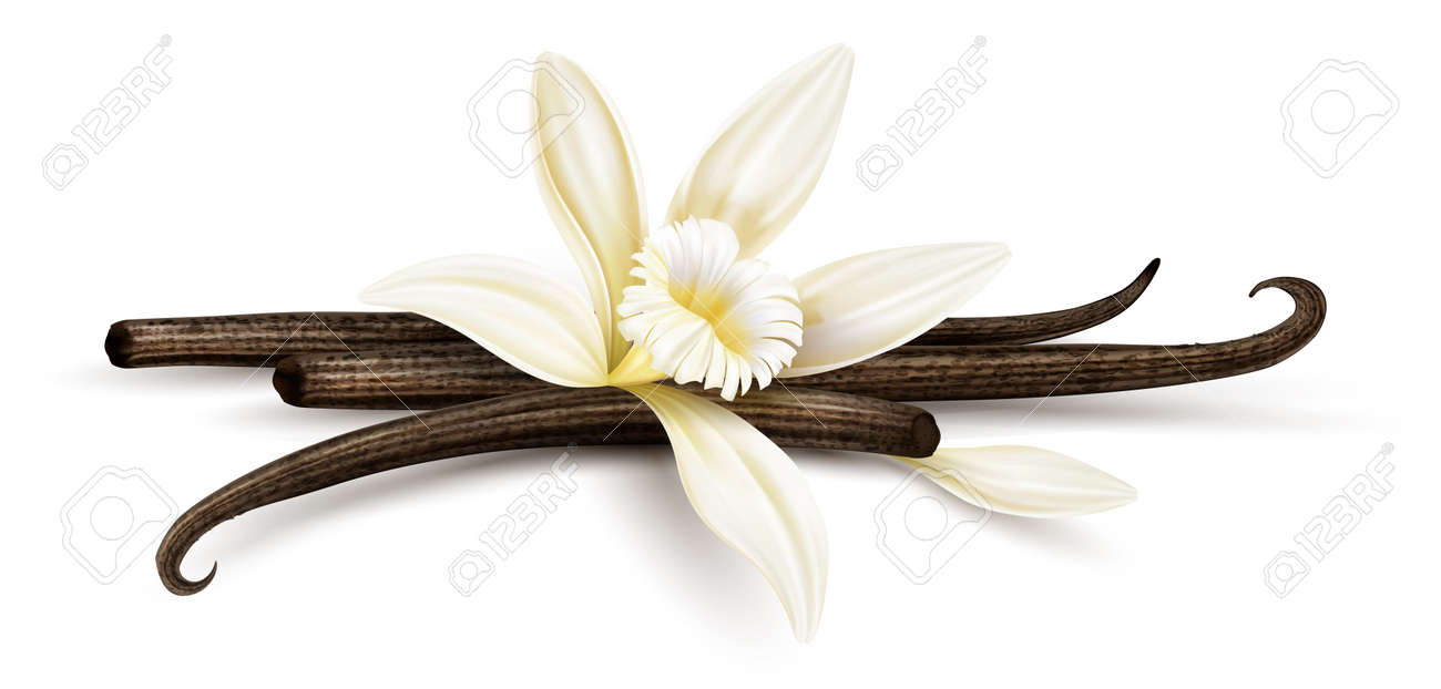 Vanilla flower with dried vanilla sticks and petal. Realistic food cooking condiment. Aromatic seasoning ingredient for cookery and sweet baking, Isolated white background. Eps10 vector illustration. - 135431880