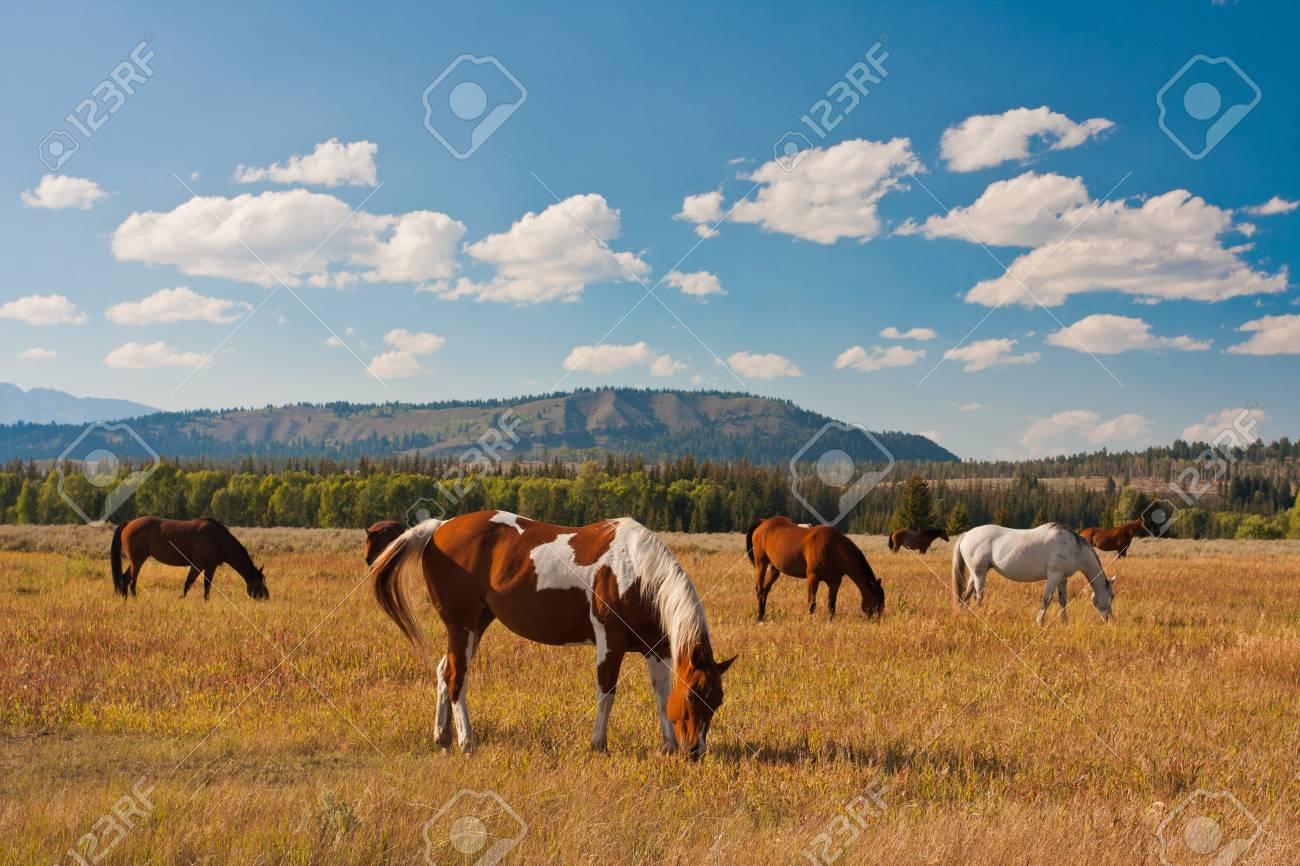 Horse enjoys in Yellowstone National Park, USA - 19161762