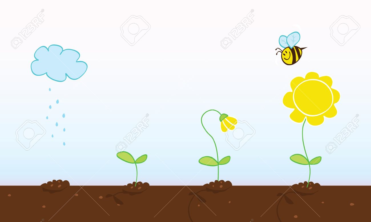 Flower growing stages. Process of growing plant in four stages. Vector Illustration. Stock Vector - 4943743