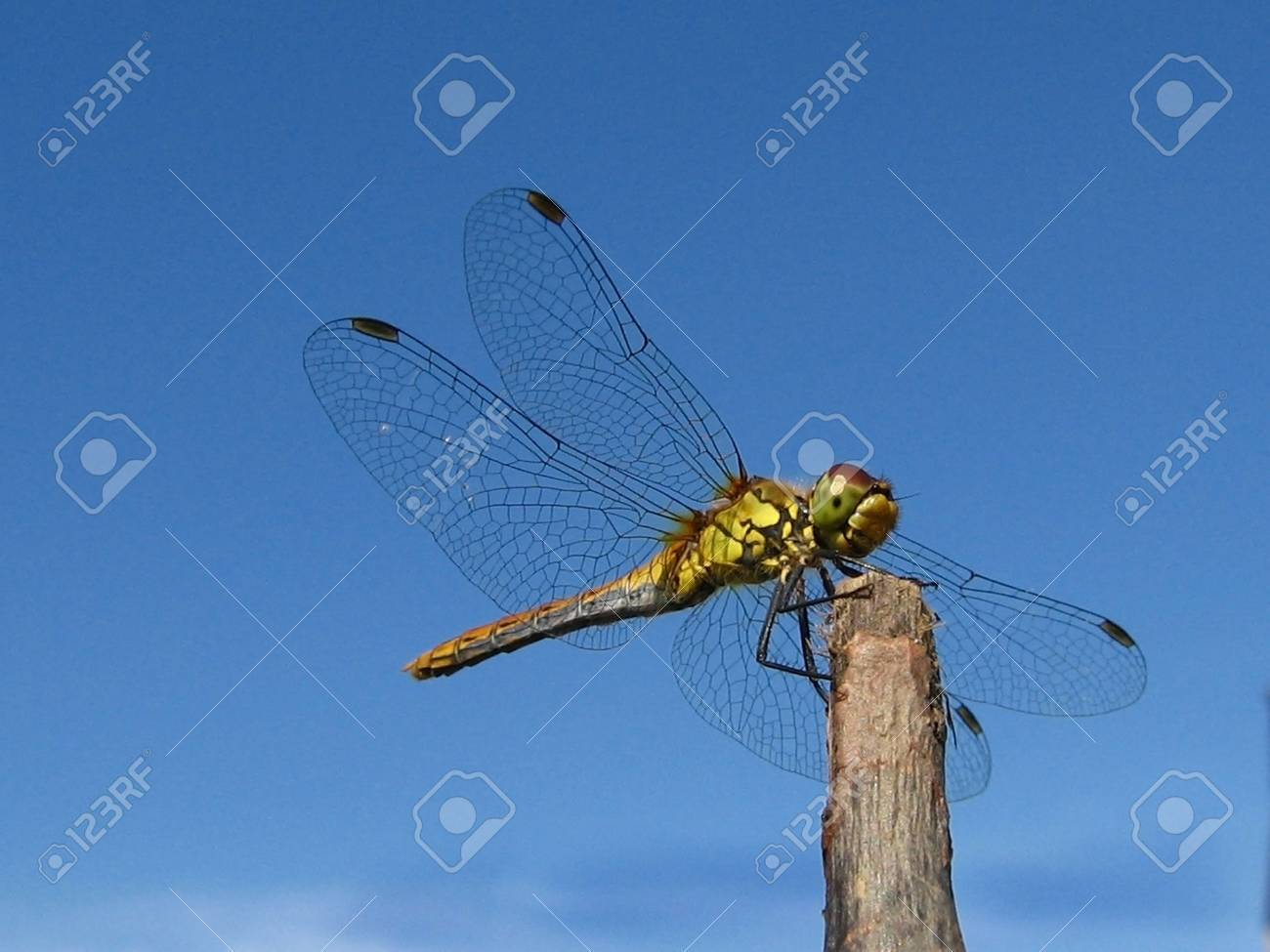 dragonfly, outdoors, wing, insect, tranquil - 2057651
