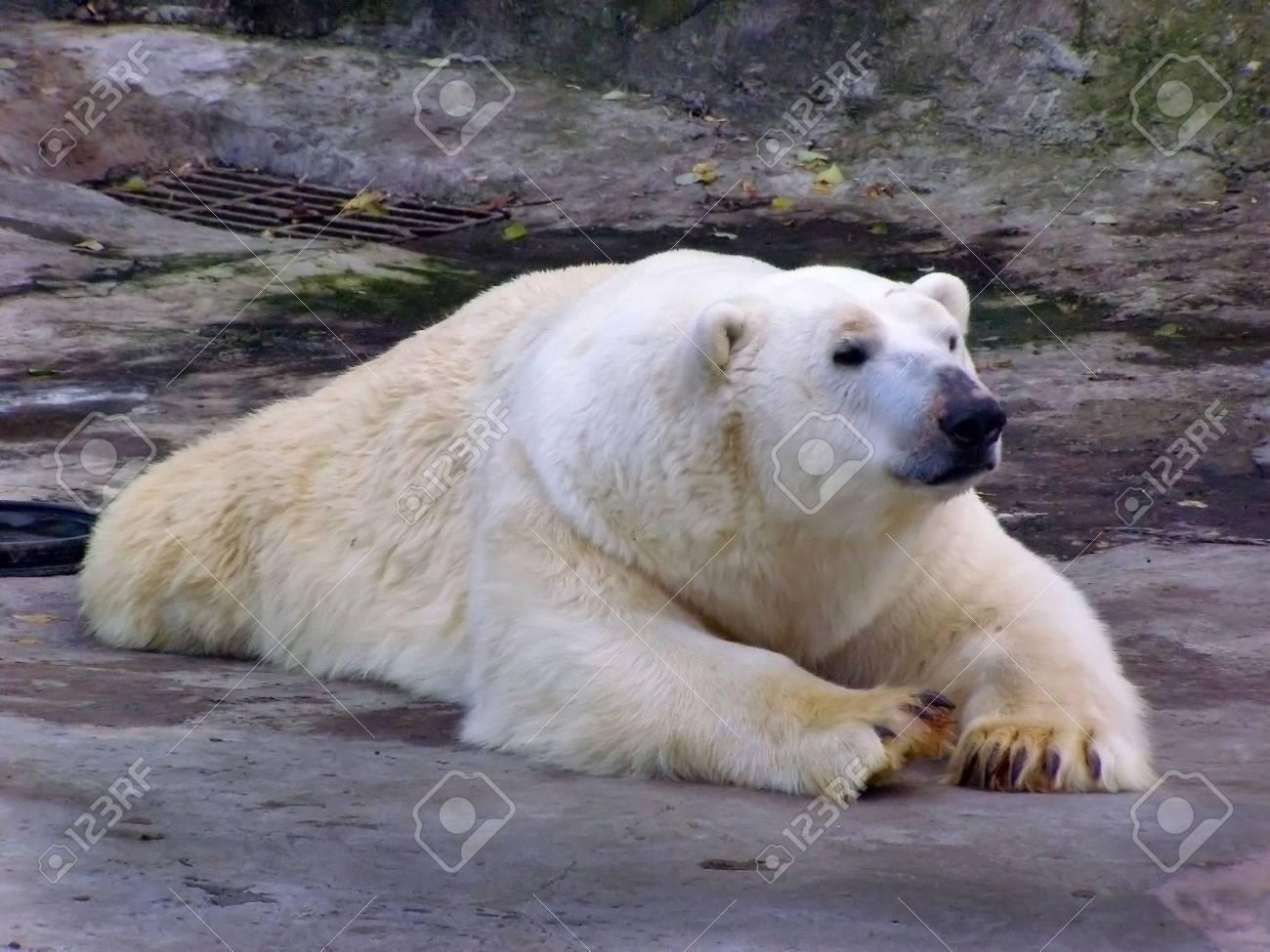 polar bear - 2057658