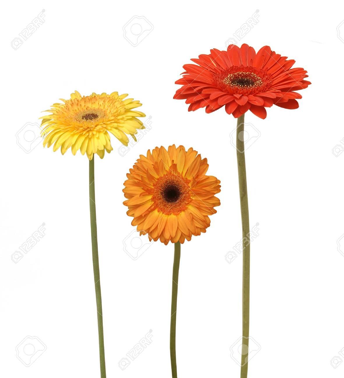 three flowers isolated on white Stock Photo - 6710910