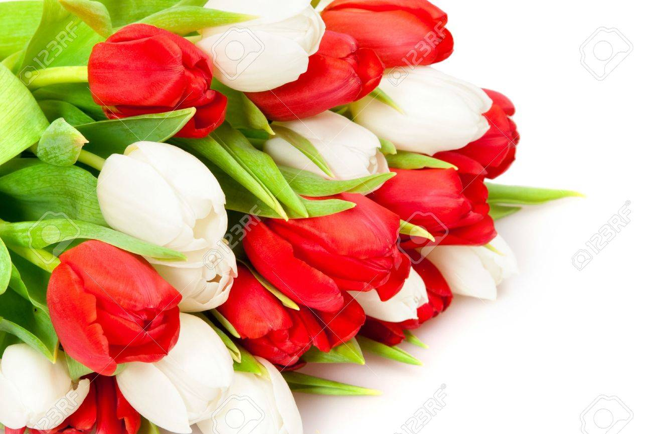 beautiful bouquet of  tulips on white Stock Photo - 6718821