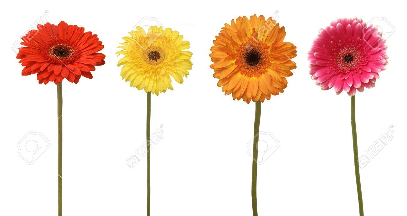 four flowers isolated on white Stock Photo - 7018586