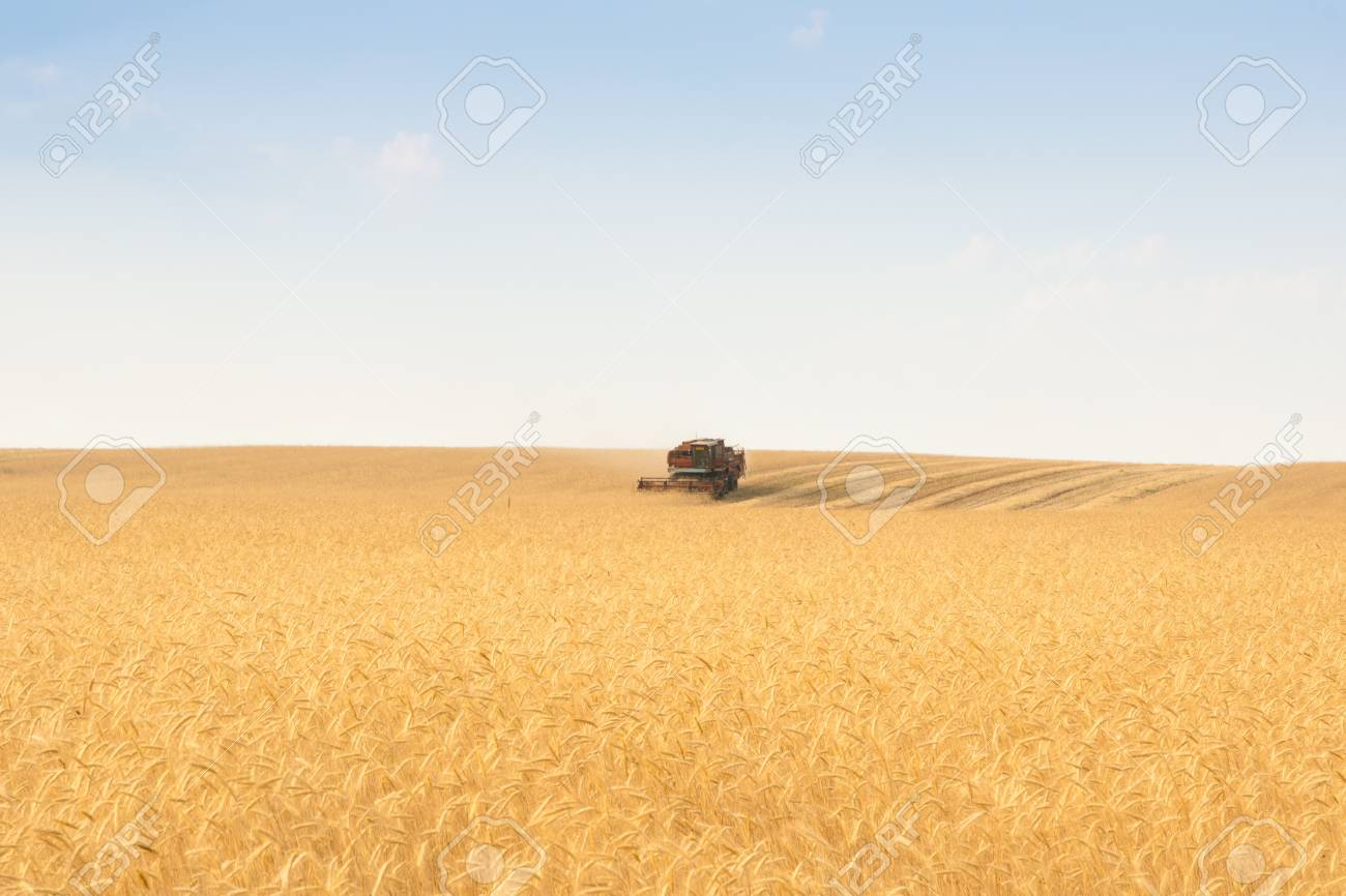 grain harvester combine work in field Stock Photo - 9342822