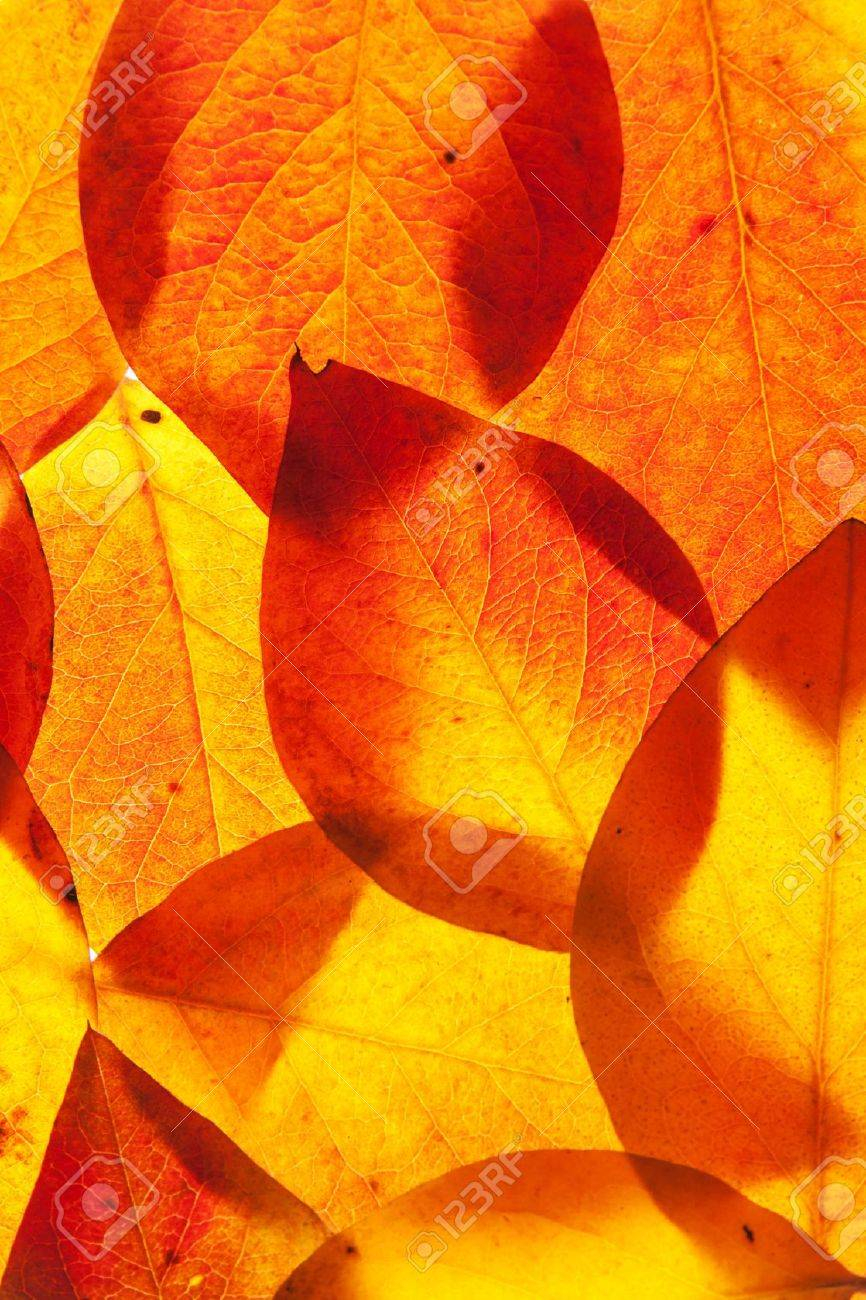 yellow and red leaves background Stock Photo - 10343370