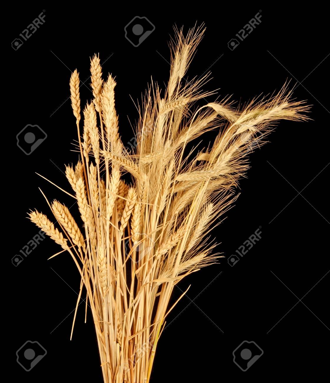 wisp of wheat and rye Stock Photo - 13012114