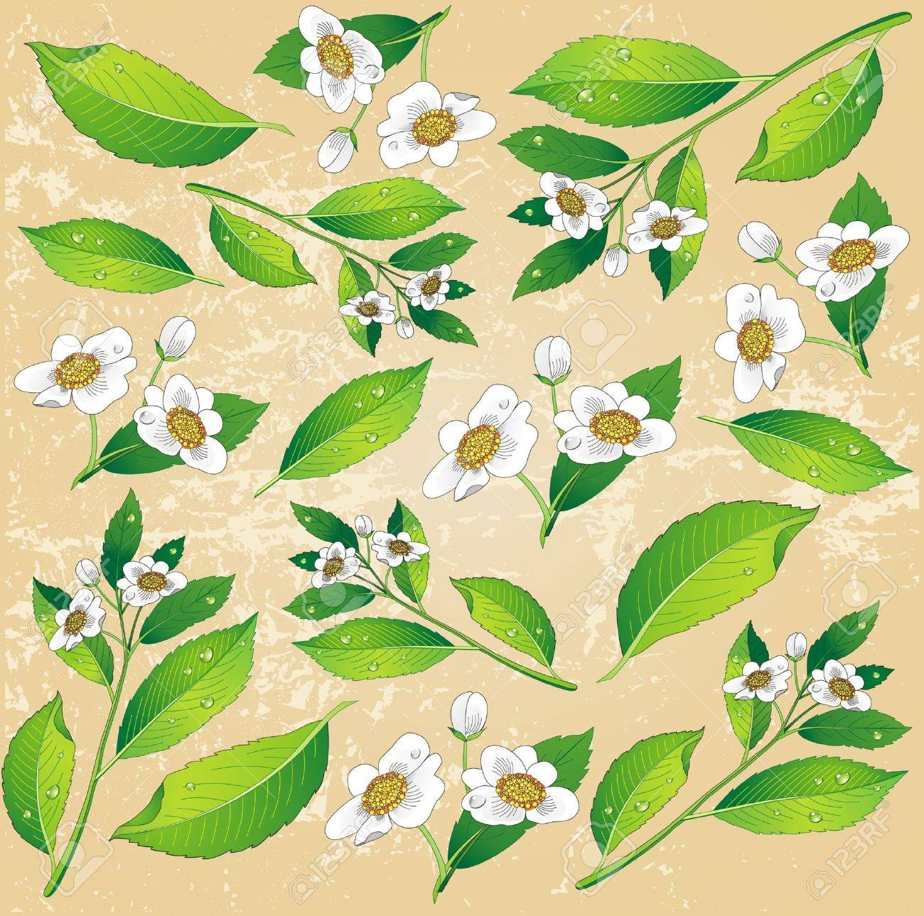 Background With A Painted Green Tea Leaves And White Flowers Royalty Free Cliparts Vectors And Stock Illustration Image 10345773