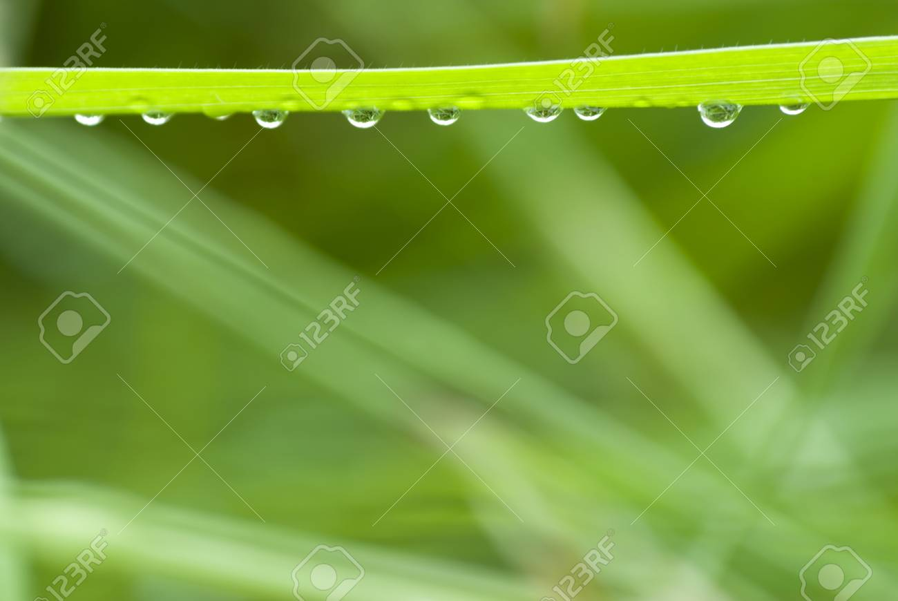 grass with hanging droplets over green blurry background Stock Photo - 1446895