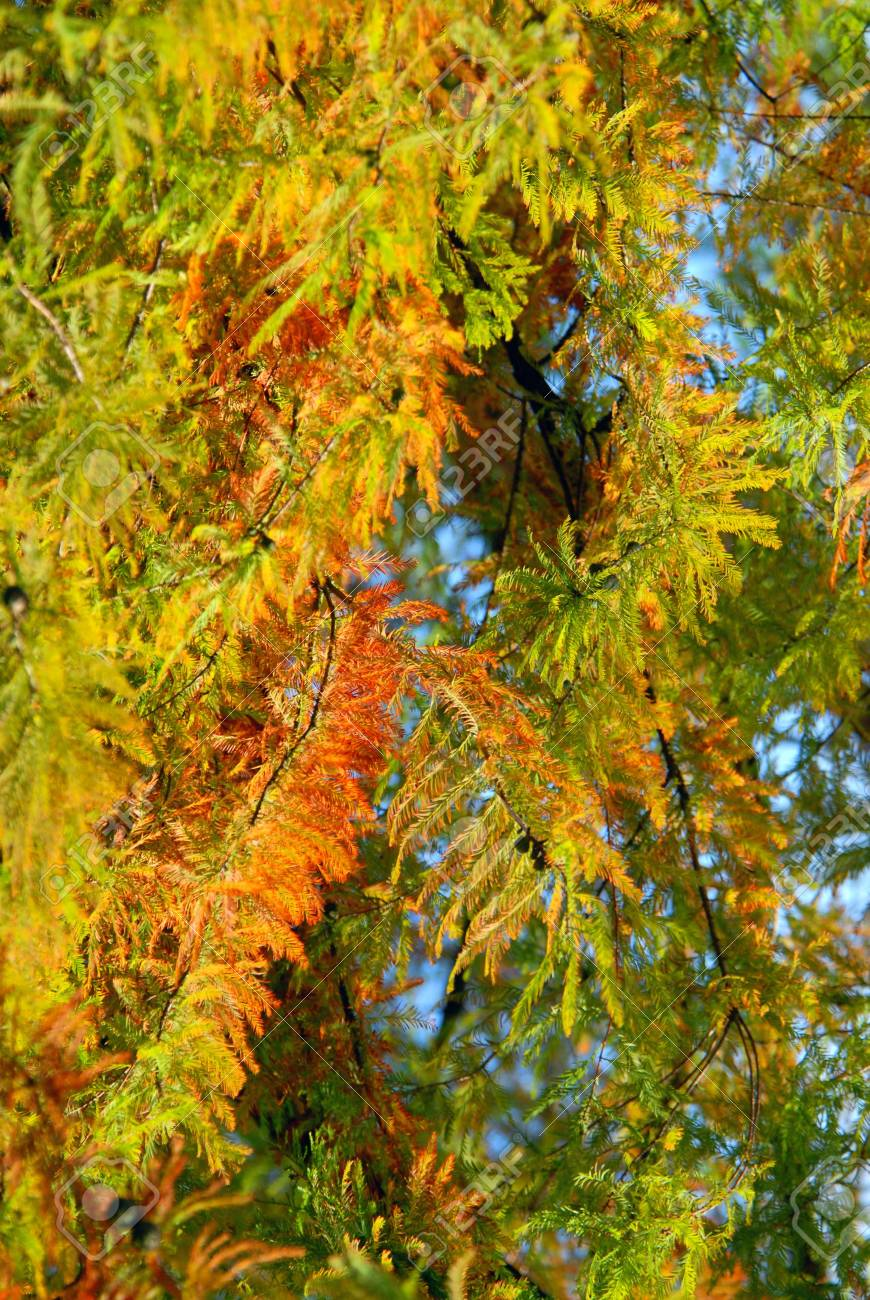 Colorful autumn leaves Stock Photo - 2207223