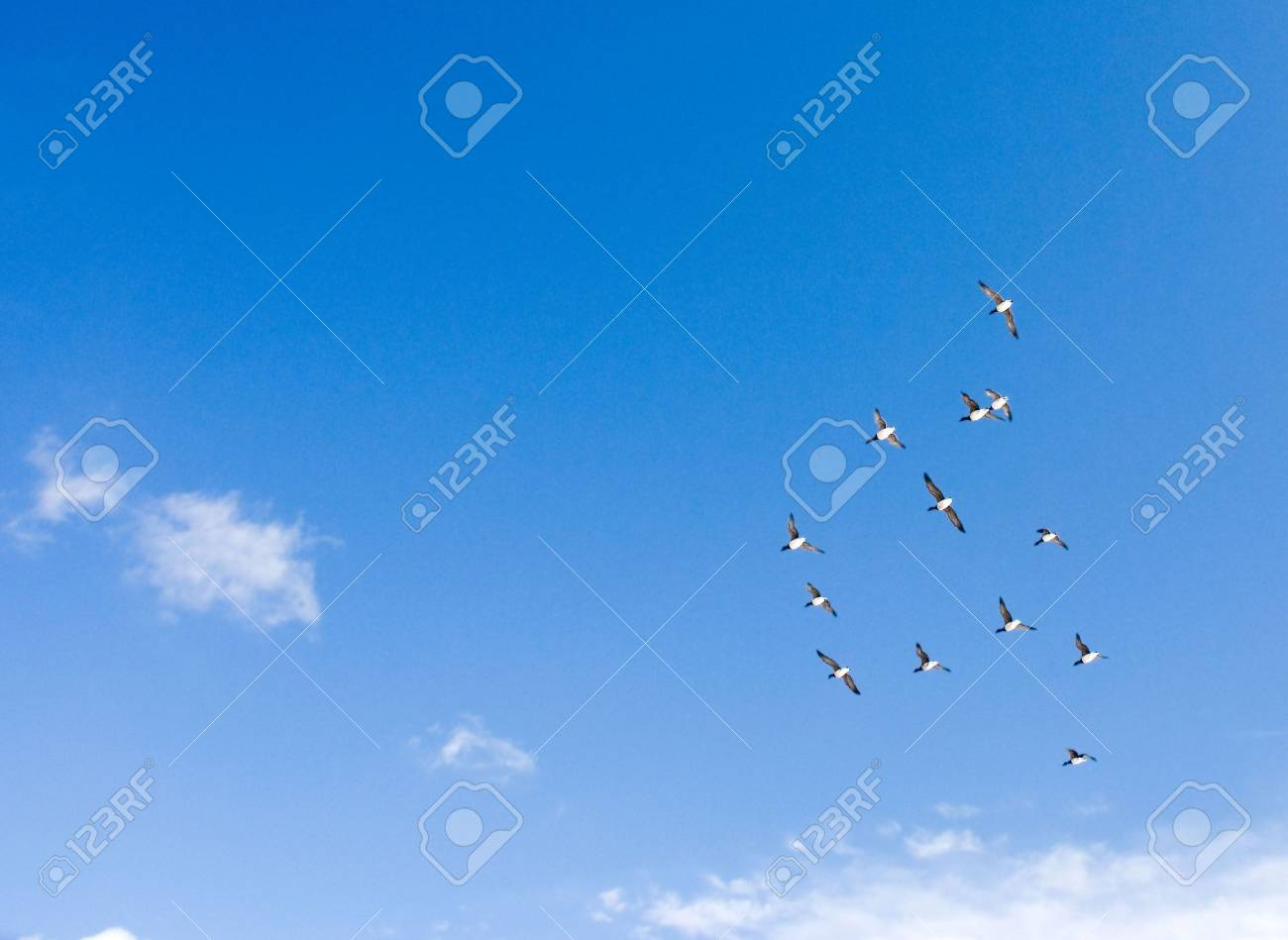 covey of geese in blue sky return from a winter hut Stock Photo - 3216557