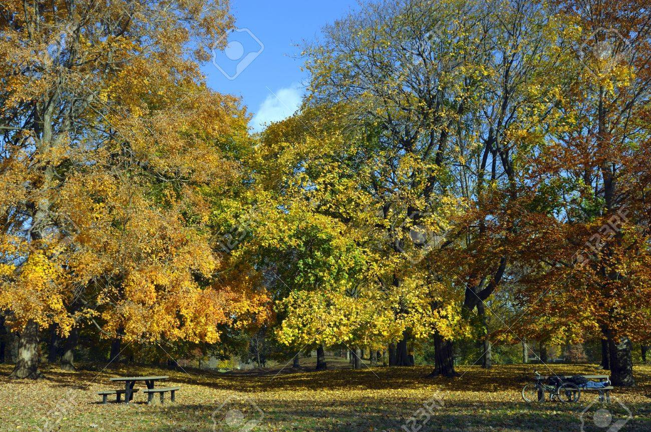 autumn colors in the park with wooden benches Stock Photo - 4085490