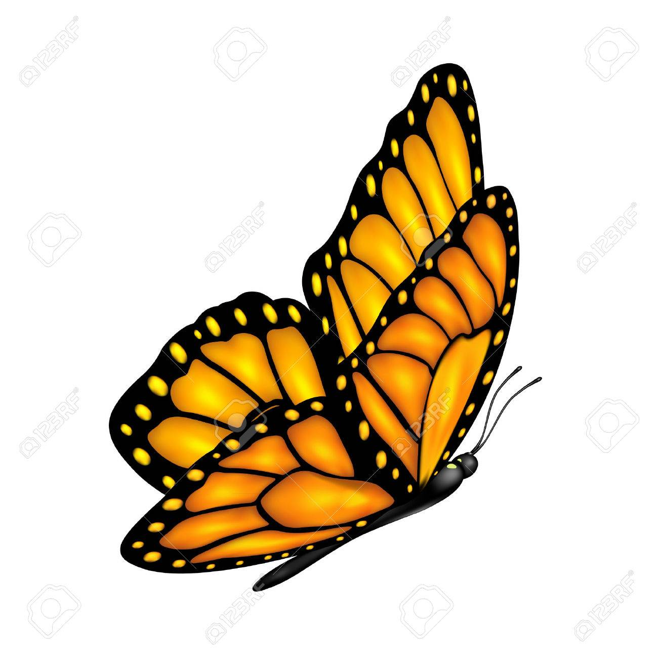Flying orange butterfly and shadow isolated on a white background, illustration - 26820617
