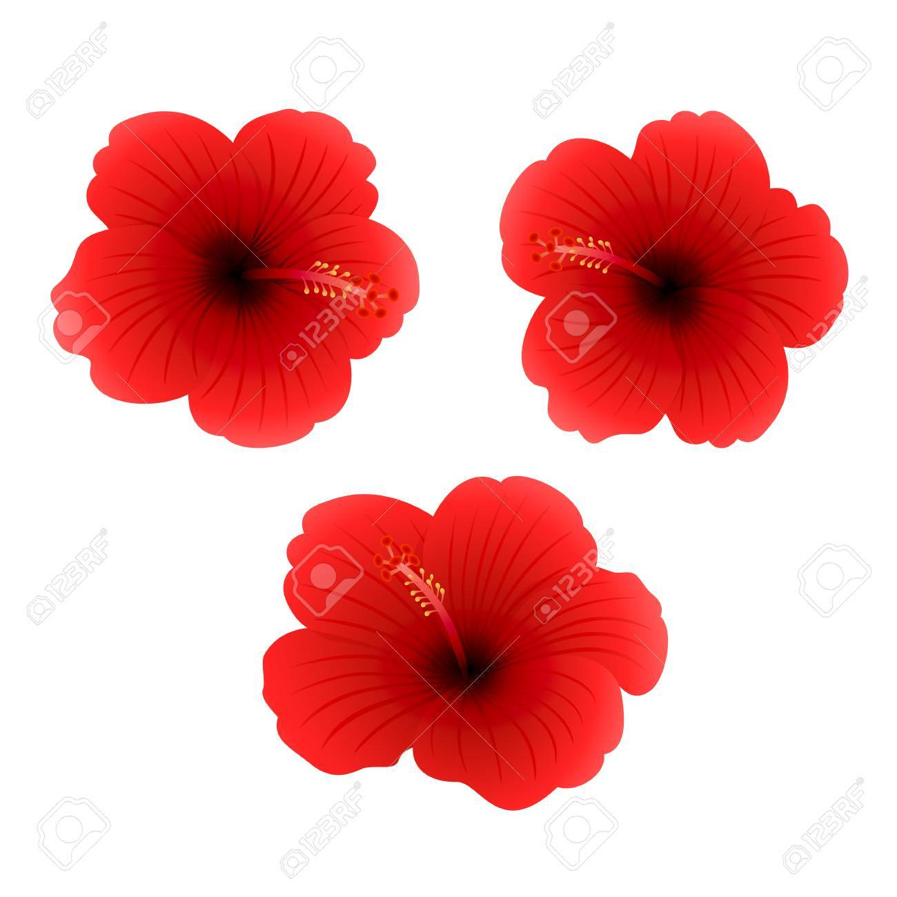 Set Of Three Red Hibiscus Isolated On White Background Beautiful
