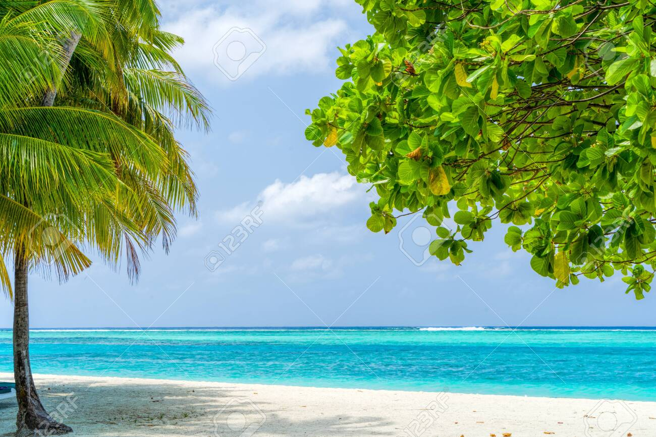 View of nice tropical beach with some palms - 137933961