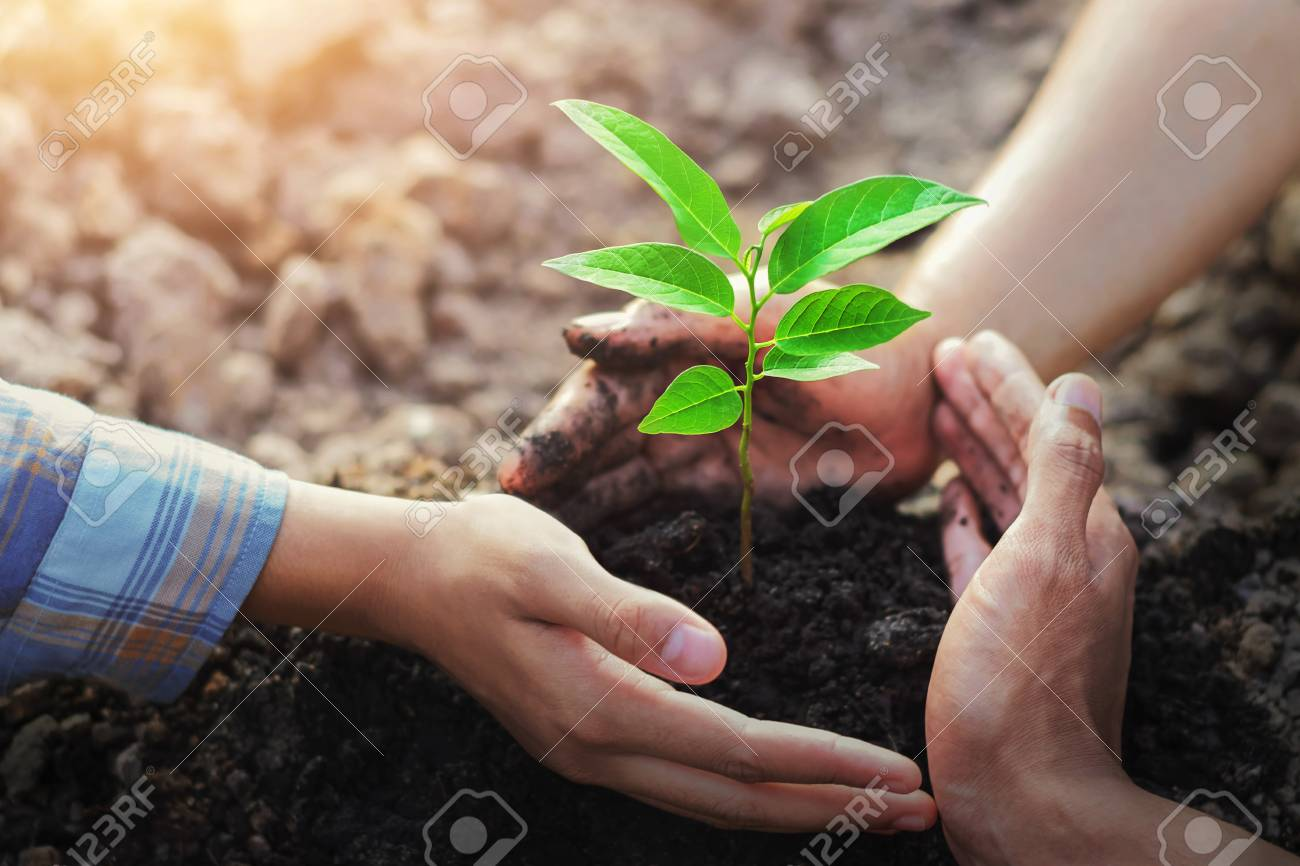 farmer three hand protection tree planting on soil with sunshine in garden - 110833573