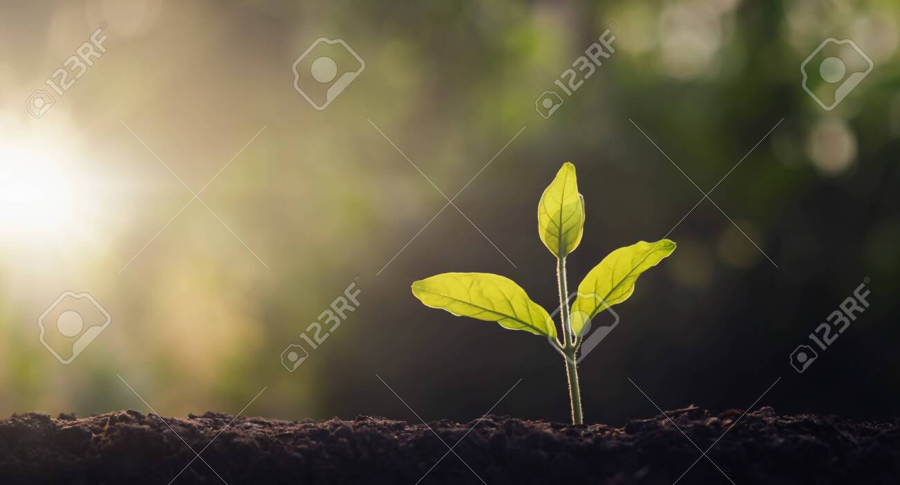 small tree growing in garden with morning light. concept eco and save earth - 139289820
