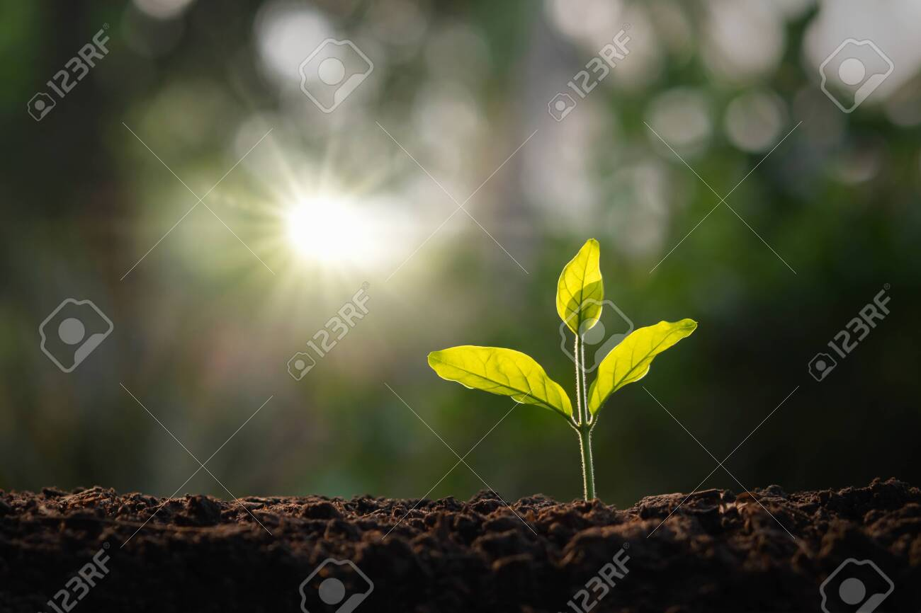 small tree growing in garden with morning light. concept eco and save earth - 139289574