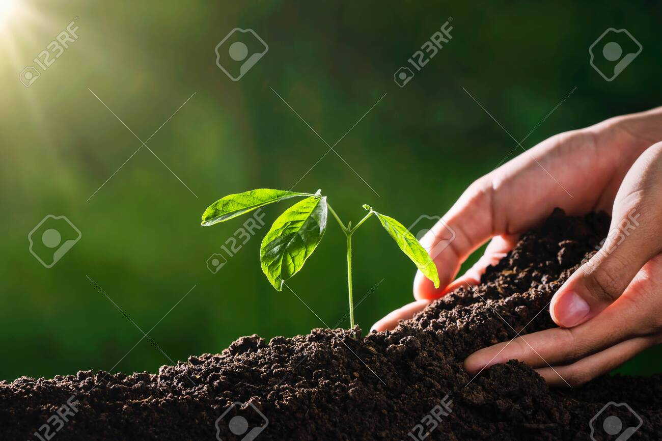 plant growing with hand and sunshine in garden. eco environment concept - 149490699