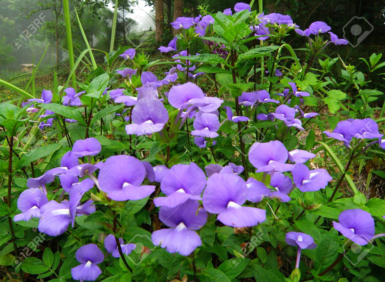 Many Purple Flowers Blooming In The Green Grass Field Stock Photo