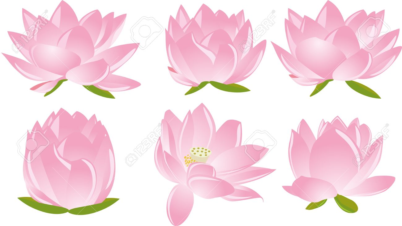 illustration of  six beautiful pink lotus(waterlily) in white background Stock Vector - 15811763