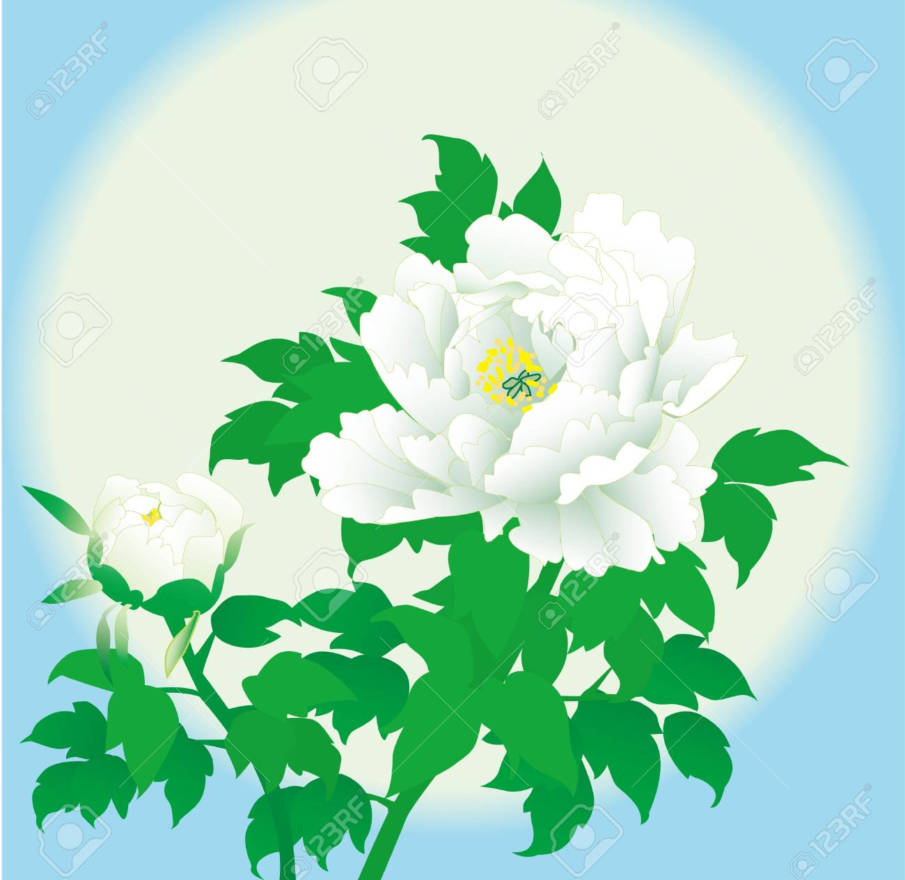 Romantic vector background white peony Stock Vector - 16356417
