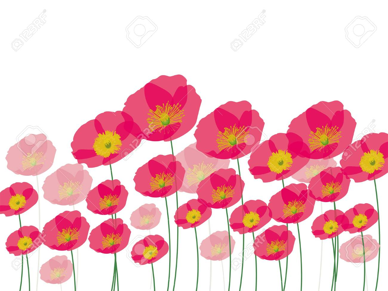 Row of poppy flowers isolated on white background Stock Vector - 17110662