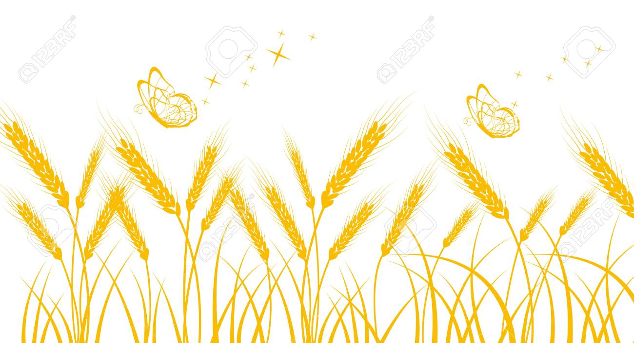 Golden wheat Stock Vector - 17090379