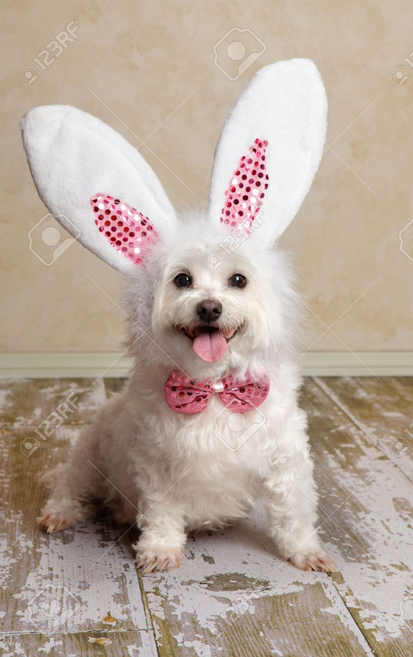 Download Puppies Bow Adorable Dog - 13088956-cute-little-dog-wearing-bunny-ears-and-matching-sequin-bow-tie-in-a-rustic-setting-suitable-for-east  Gallery_74289  .jpg