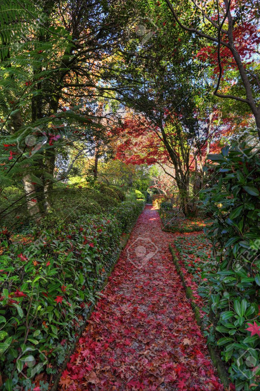Blue Mountains, Australia. Nature rolls out the red carpet. This pathway covered in fallen leaves of mostly red