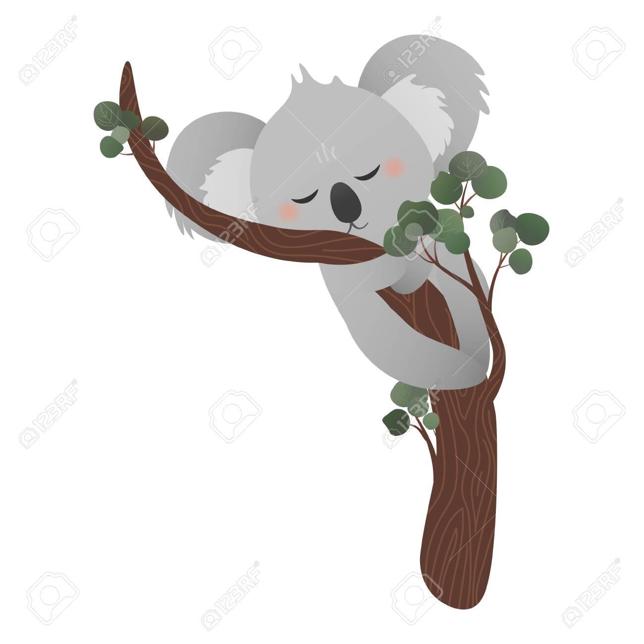 Cute Koala Bear Sleeping On Eucalyptus Tree While Hugging Tree Royalty Free Cliparts Vectors And Stock Illustration Image 157098006 5,654 eucalyptus cartoons on gograph. cute koala bear sleeping on eucalyptus tree while hugging tree