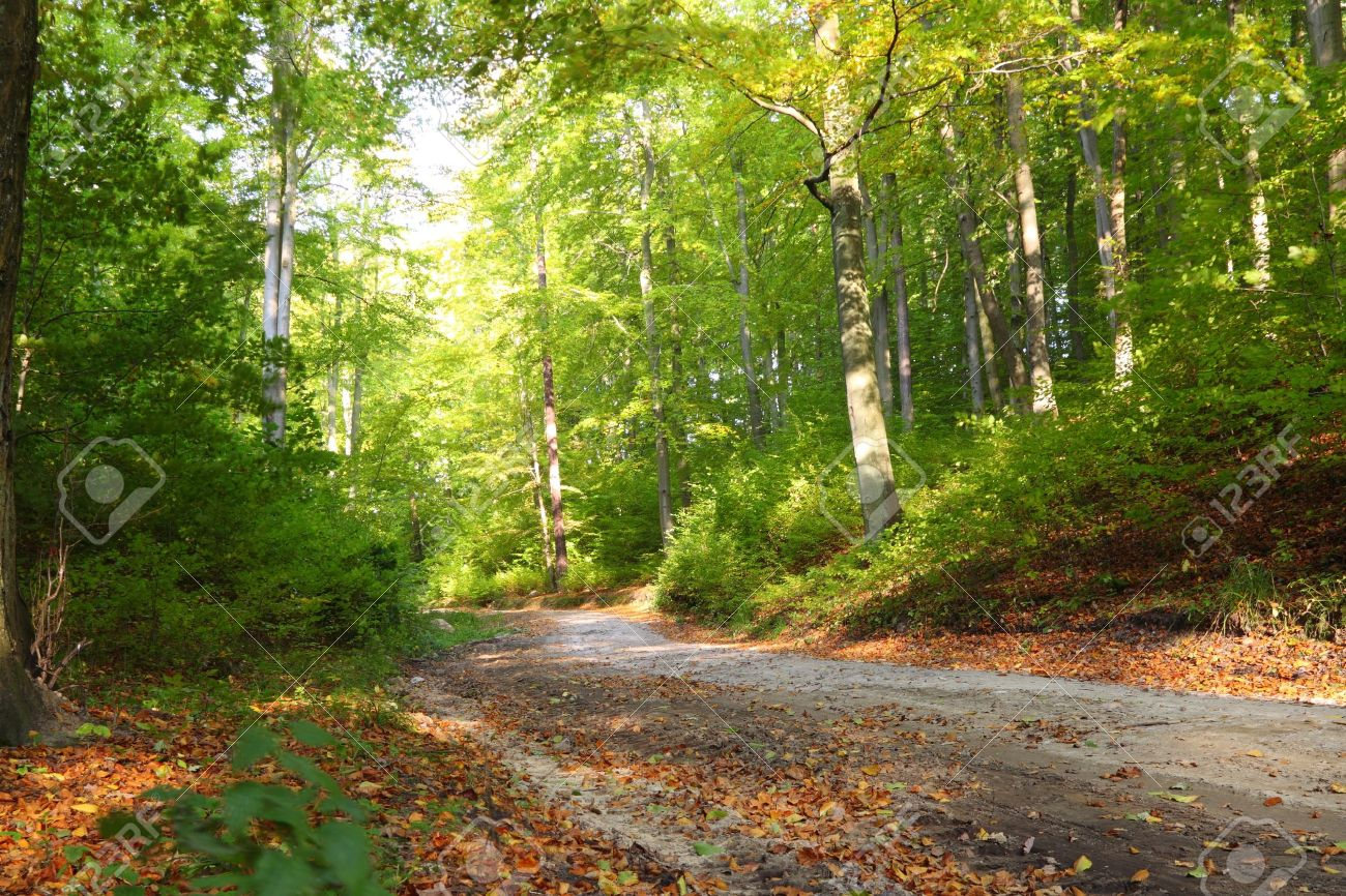 Rural autumn scenery - Fall in forest - park road Stock Photo - 9964355