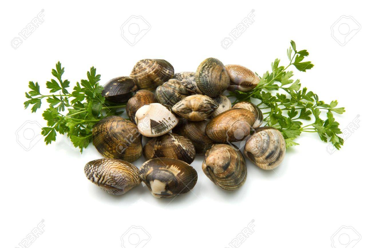 Live clams in isolated white background Stock Photo - 10442442