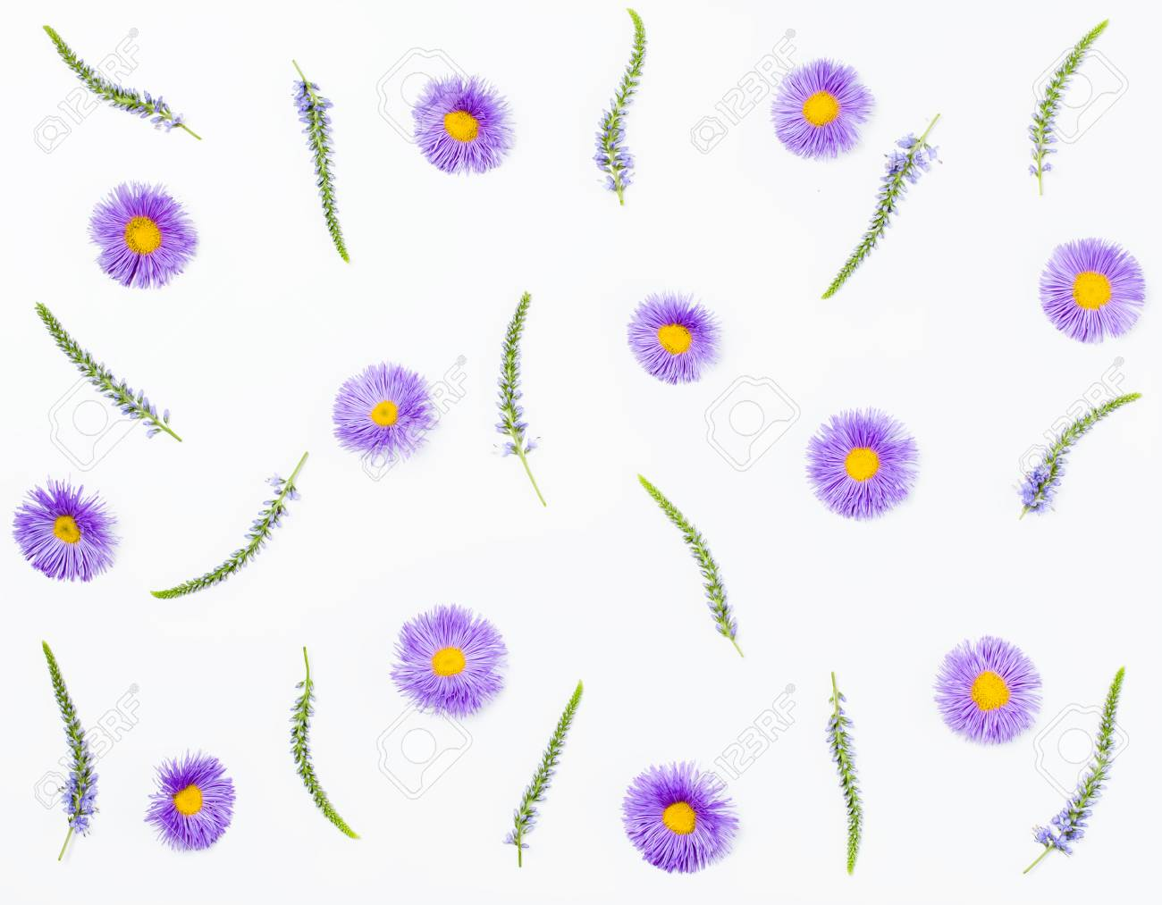 Floral Pattern Made Of Veronica Flowers And Violet Aster On White