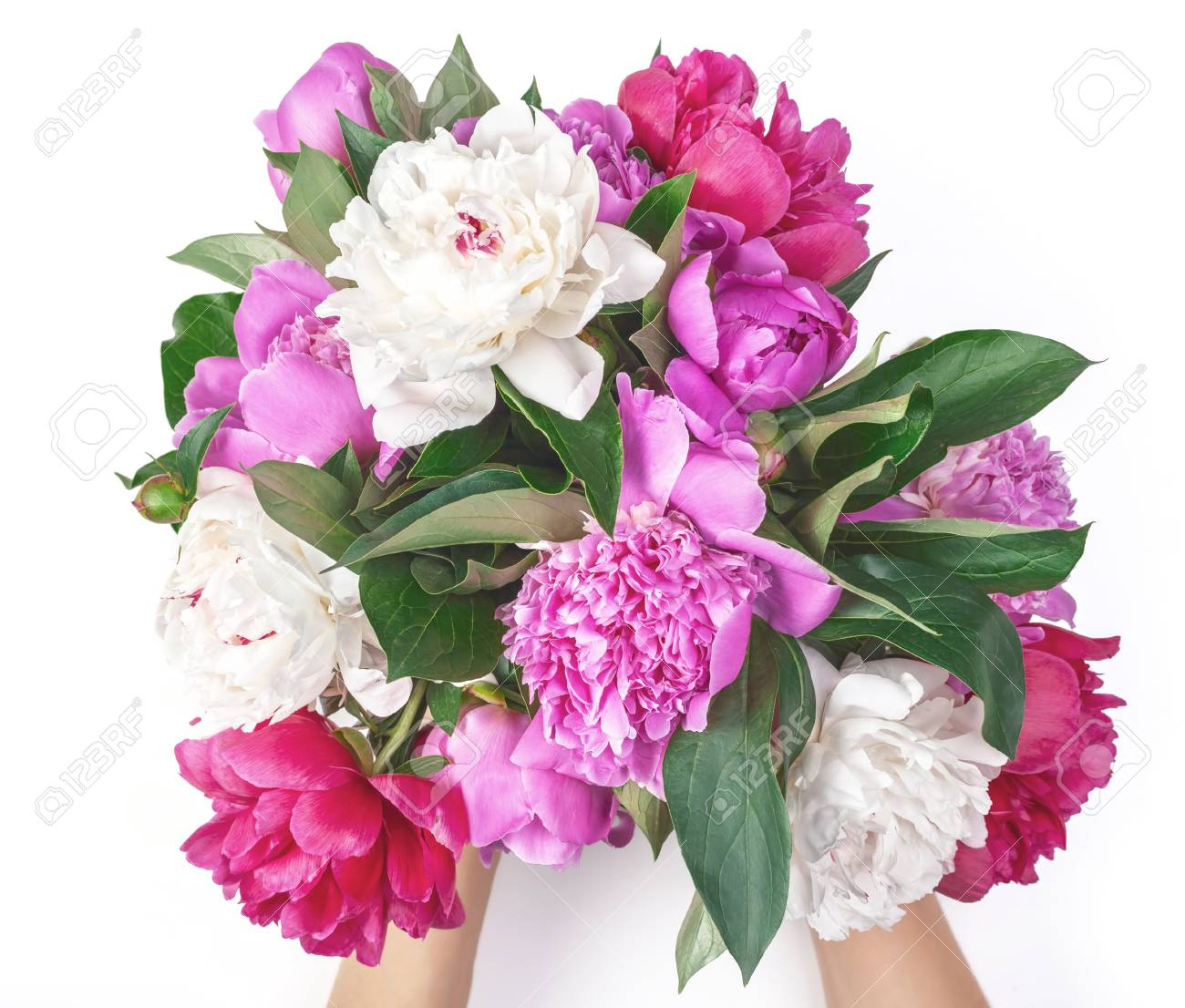 Bouquet of pink and white peony flowers in woman's hand isolated on white background. Top view. Flat lay. - 106762583
