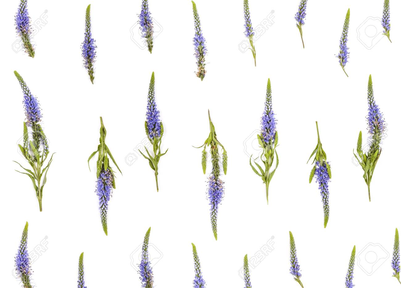Floral Pattern Made Of Veronica Flowers On White Background Stock