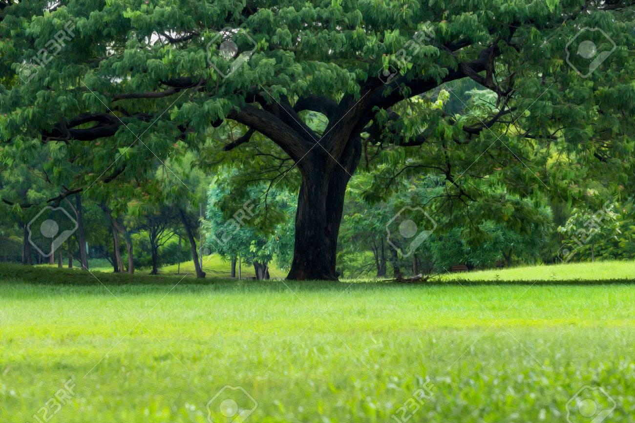 Ancien Grand Arbre Dans La Forêt Verte Filtre De Peinture à L