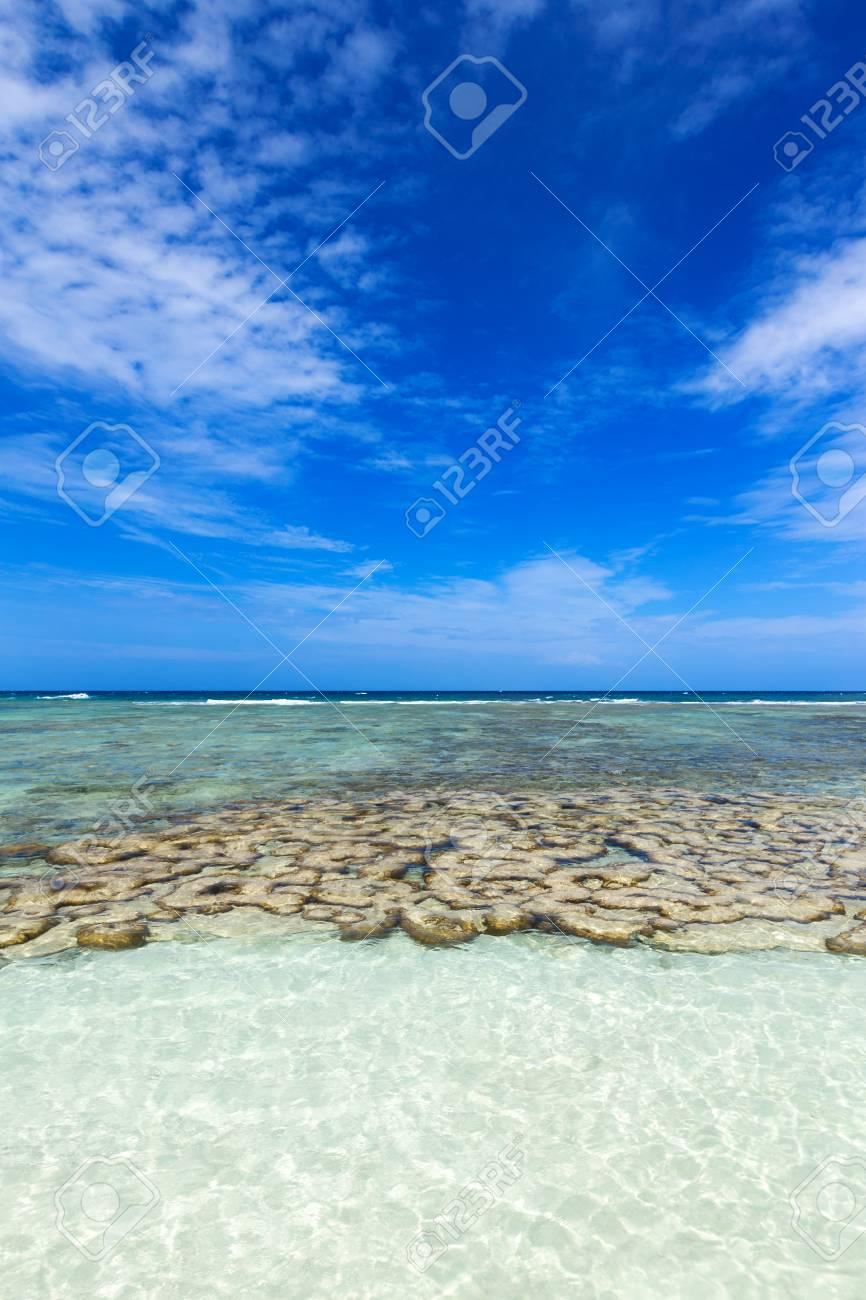 Beautiful Coral Near The Tropical Beach At Freedom Beach Koh