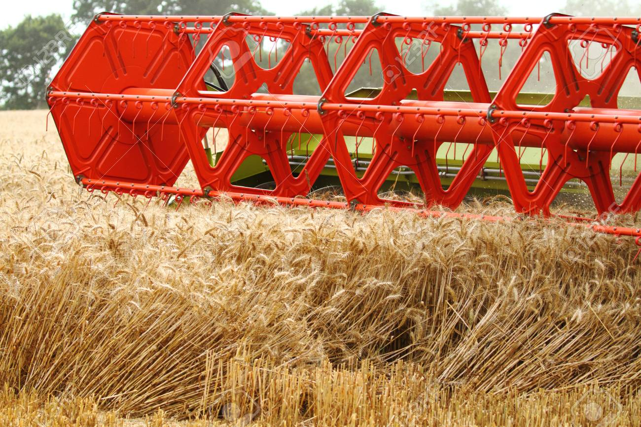 Red combine harvester head cutting crops