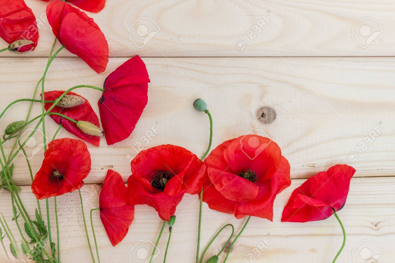 blossoming wild poppies on a light wooden background. wallpaper