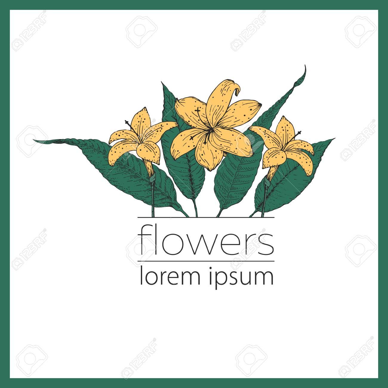 Mano Dibuja La Ilustracion De La Flor Del Vector Logo Botanica