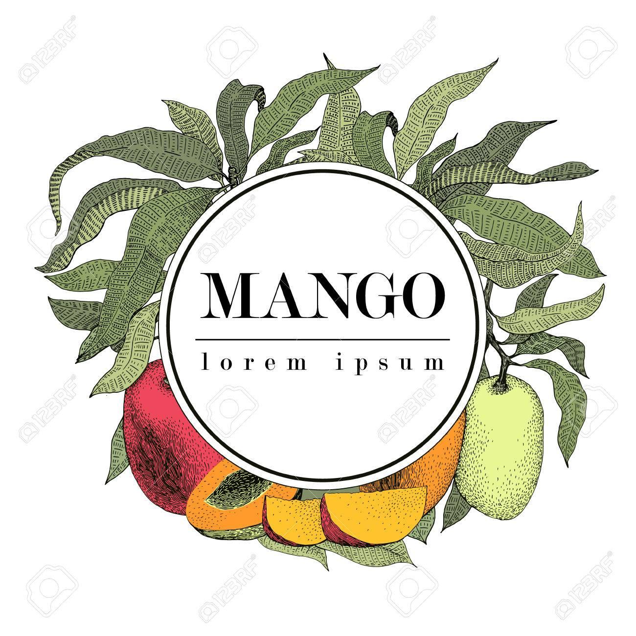 Mango Tree Vintage Design Template. Botanical Mango Fruit Frame ...