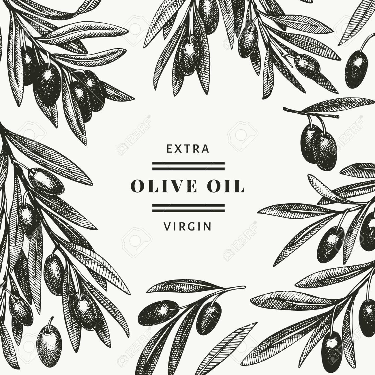 Olive branch design template. Hand drawn vector food illustration. Engraved style mediterranean plant. Vintage botanical picture. - 140901997