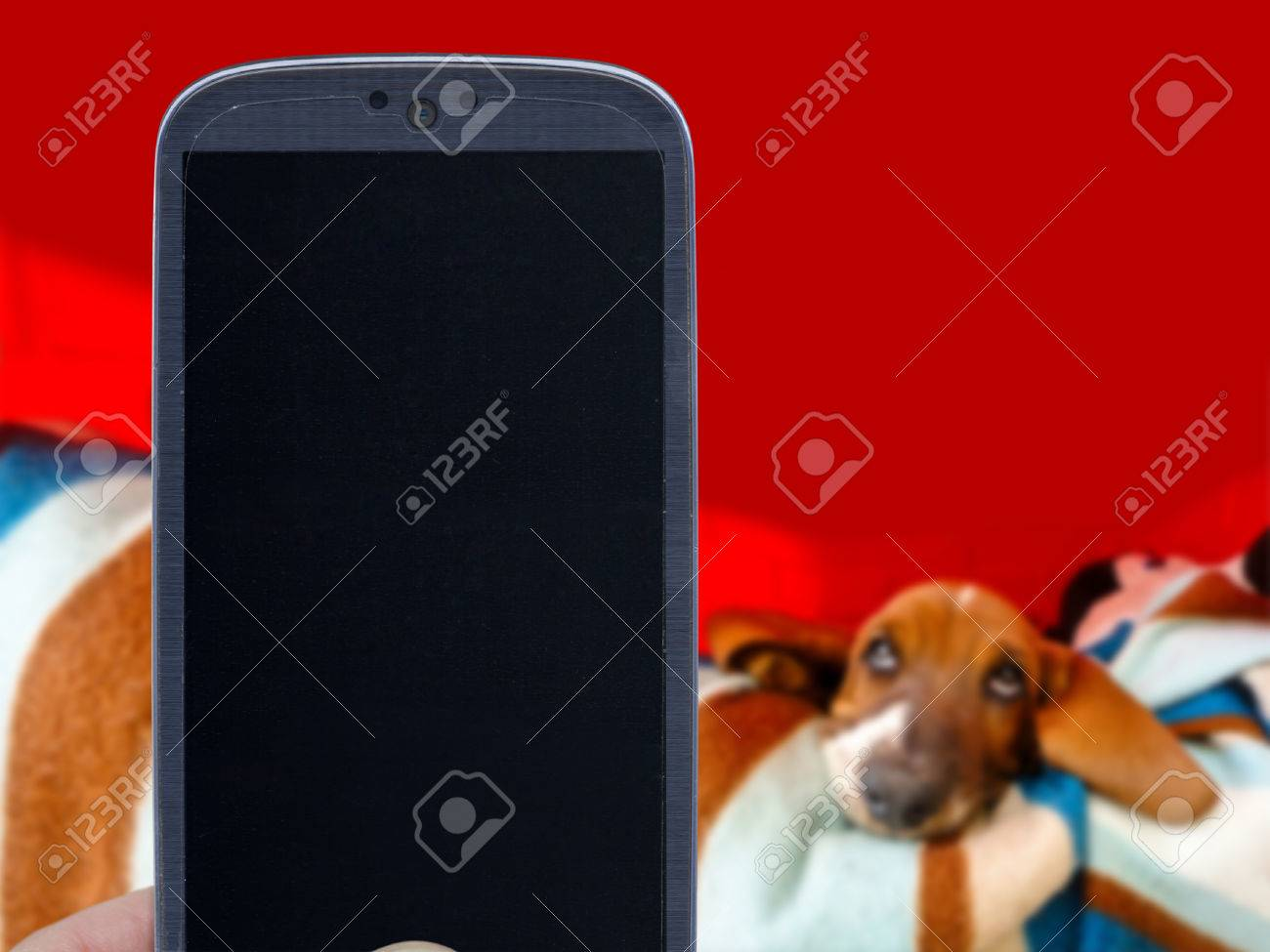 Smatrphone and basset hound on blurred background  Idea for pet