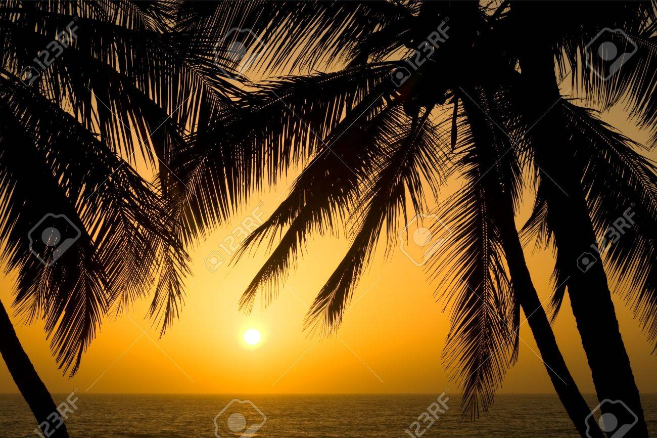 Image of a Tropical Palm Tree Sunset Background Stock Photo - 8849111