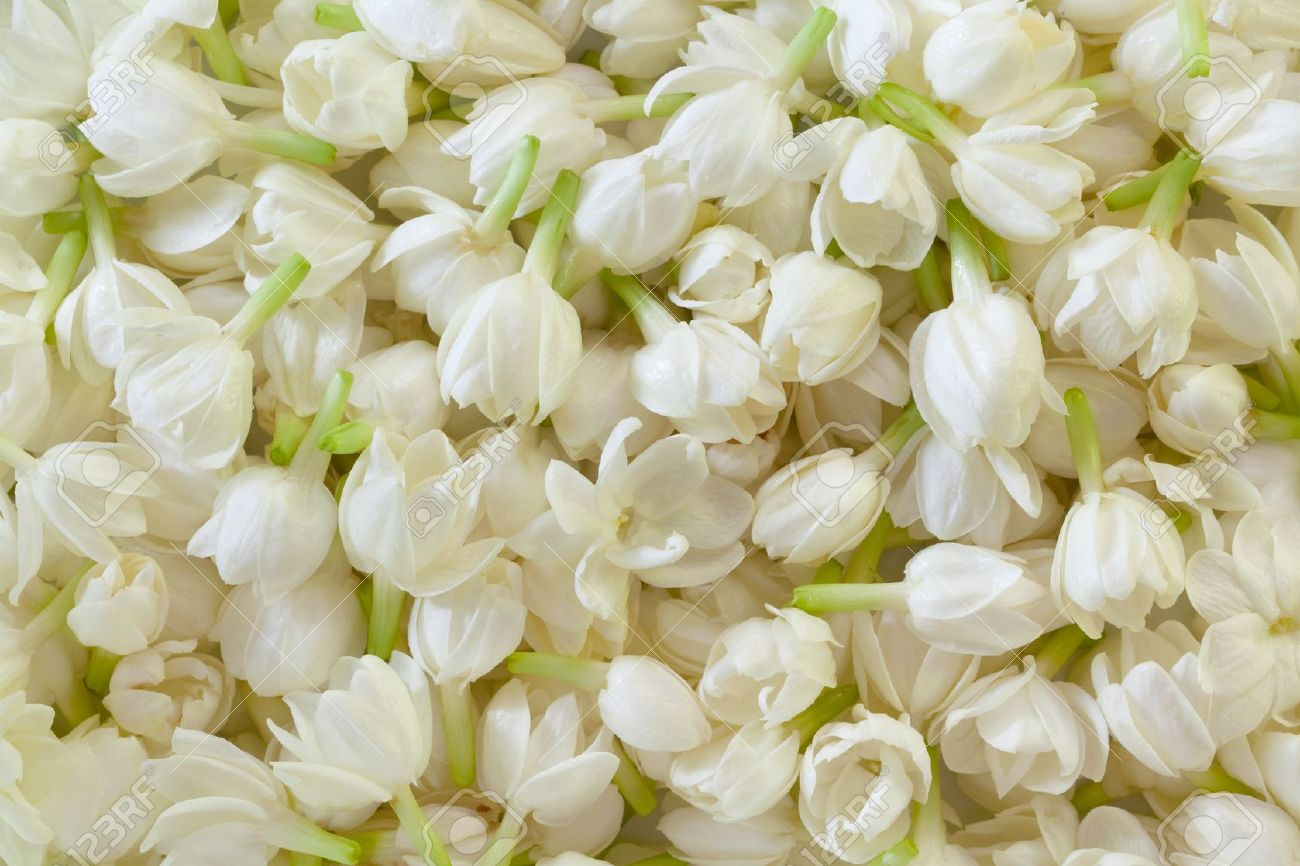 Image Of Fresh Jasmine Flower Background Stock Photo Picture And