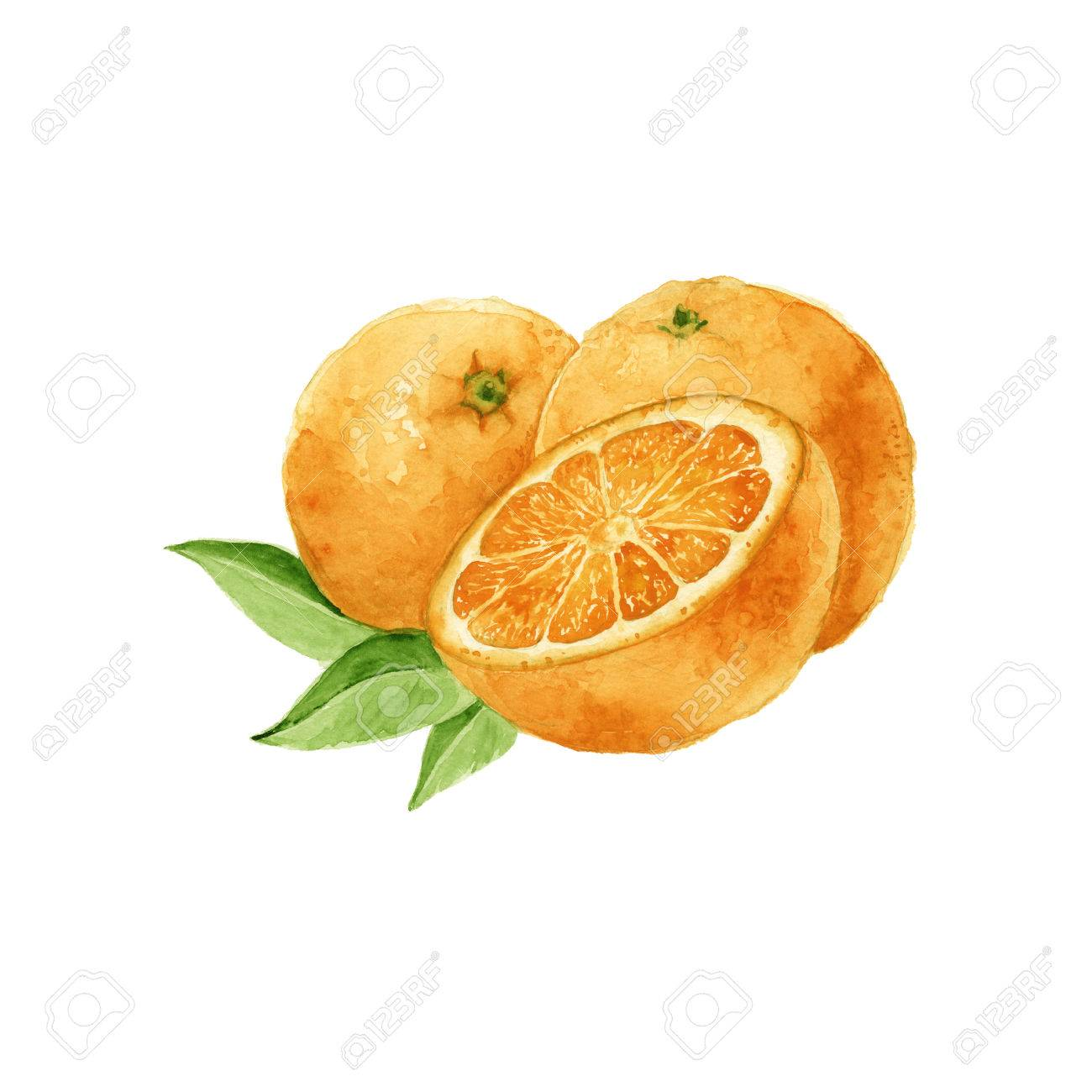 hree oranges. in section. isolated. watercolor - 54405635