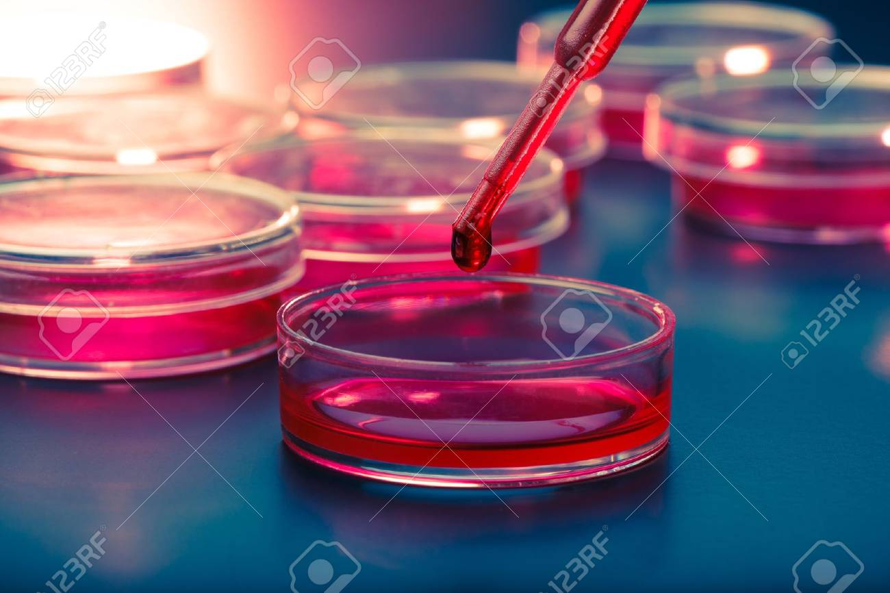 Pipette with drop of liquid and petri dishes Stock Photo - 14493891